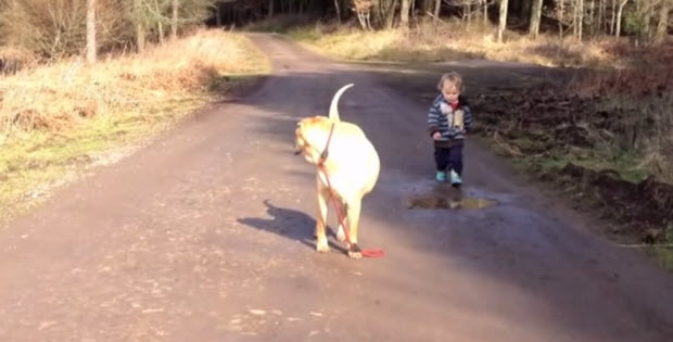 dog-is-playing-with-his-baby-boy-owner1
