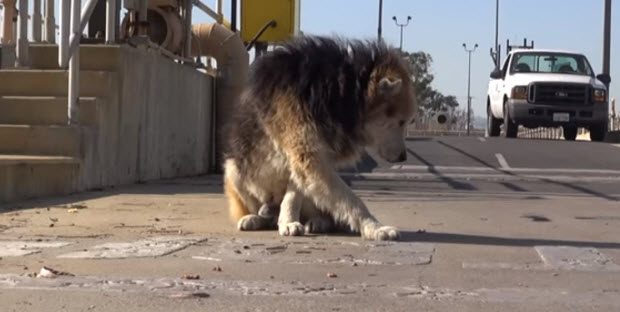 dog-rescue3