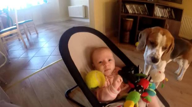 dog-steals-babys-toy