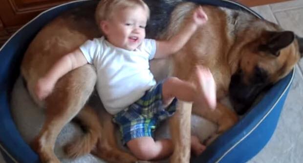 german shepherd with baby