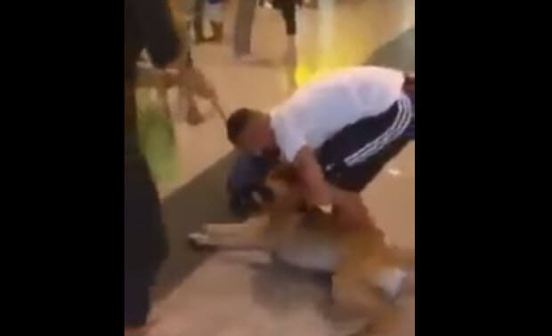 dog-reuniting-owner-3-years
