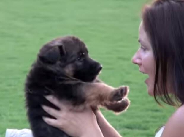 german-shepherd-puppy-training-school-2