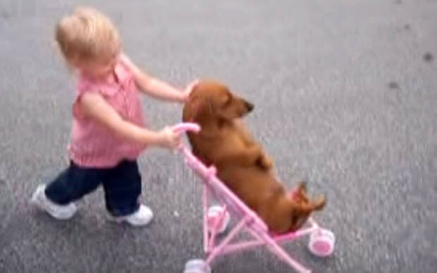 girl-pusshing-dachshund-in-stroller-1