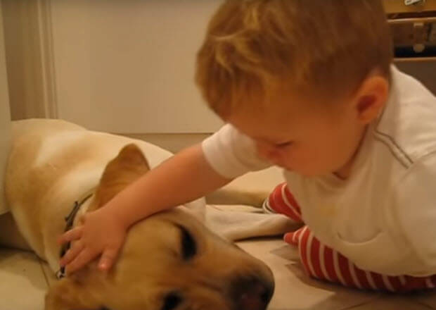 little boy with his labrador dog