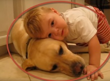 boy loves labrador dog