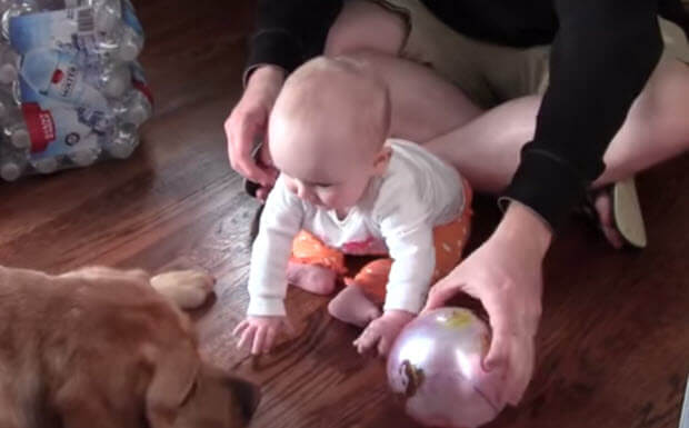 labrador dog is playing with baby