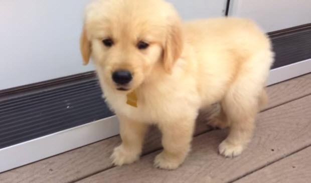 puppy-mail-2