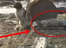dog saves dog