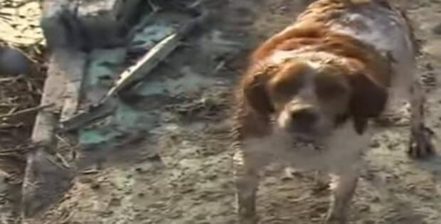 dog-begs-cameraman-to-save-friend