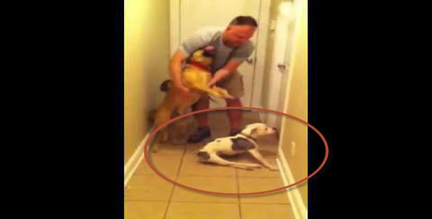 Special Need Dog Reunion - Very Touching And Heart Warming
