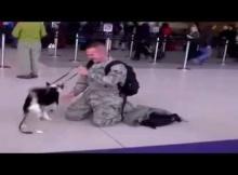 dog misses owner
