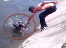 animal rescue video