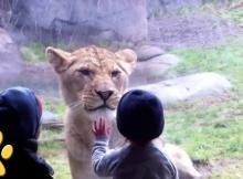 kids love zoo