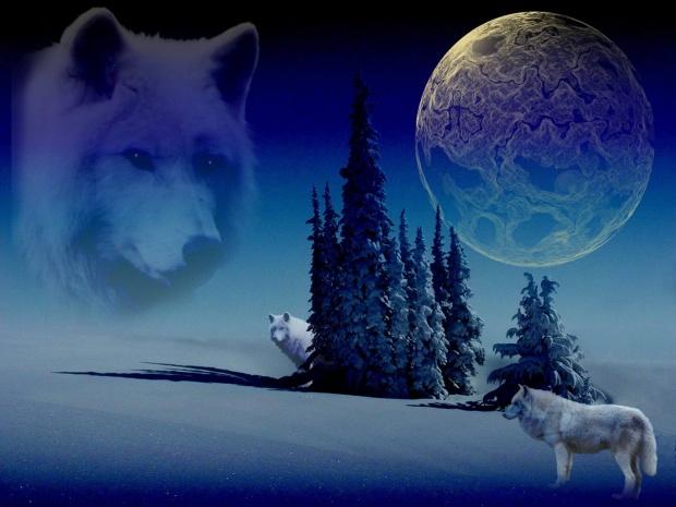 wolf-1098252