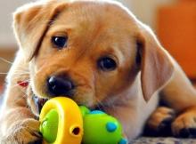 funny cute dog videos