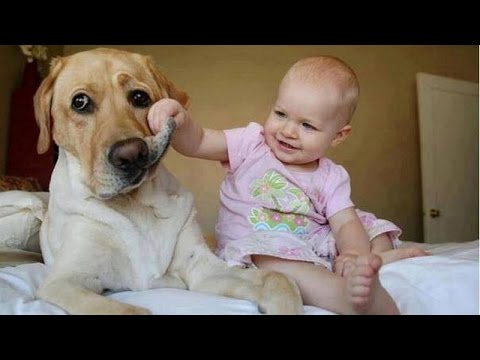 huge dogs play with small babies