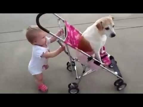 kid pushes dog