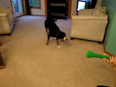 funny dog videos