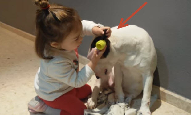 little girl plays vet