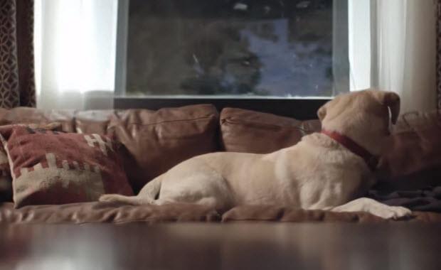 dog-mans-best-friend-2