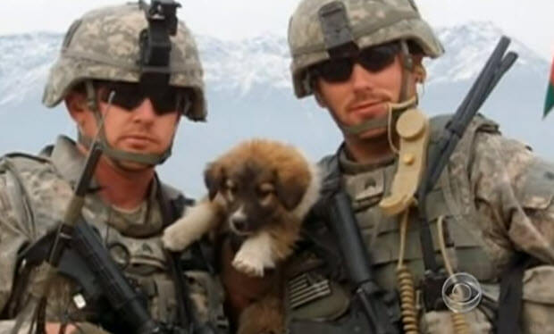 dogs-save-soldiers-lives-unbelievable