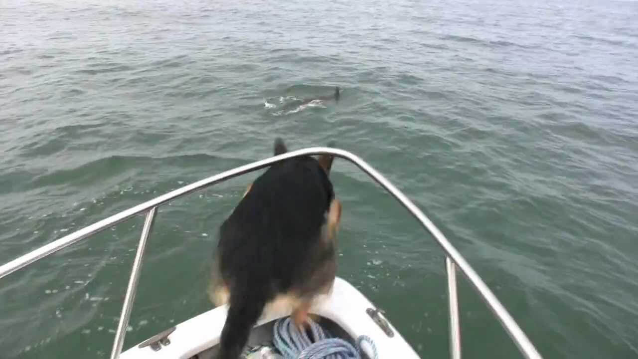 This German Shepherd Saw Dolphin What Happens Next Is Unbelievable