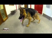 gsd with spine defect