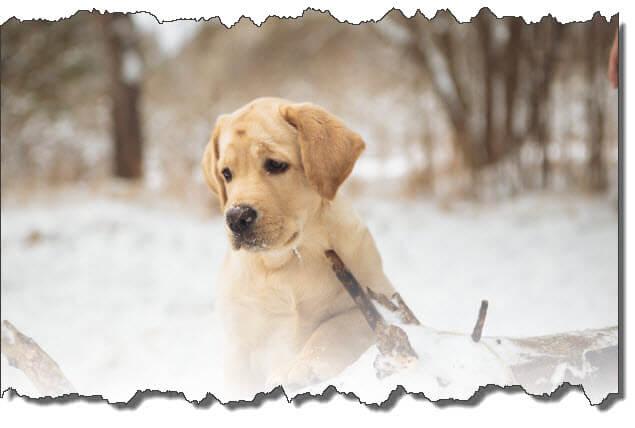 dog outside in freezing weather