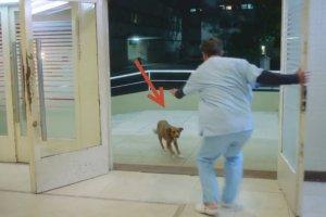 man stroke dog follows