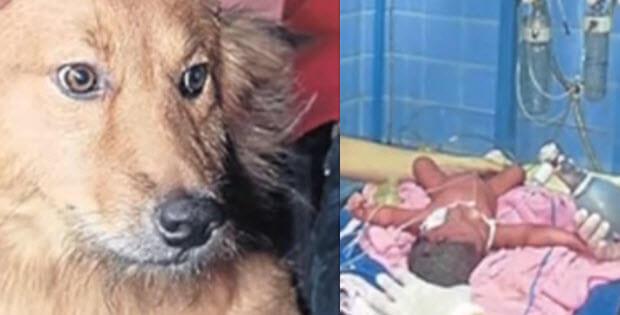dog saves newborn from dumpster