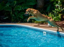 Risks Dog Play in Water
