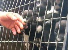 1000 animals rescued