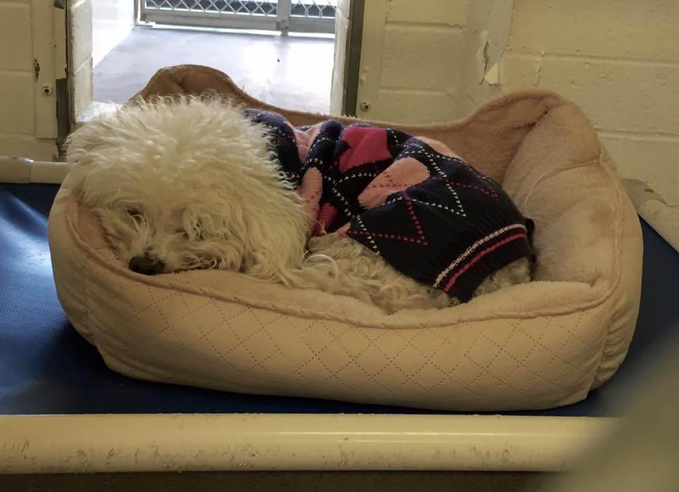 dog was surrendered