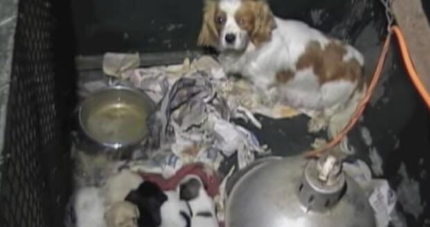 beagel-dog-rescue-4