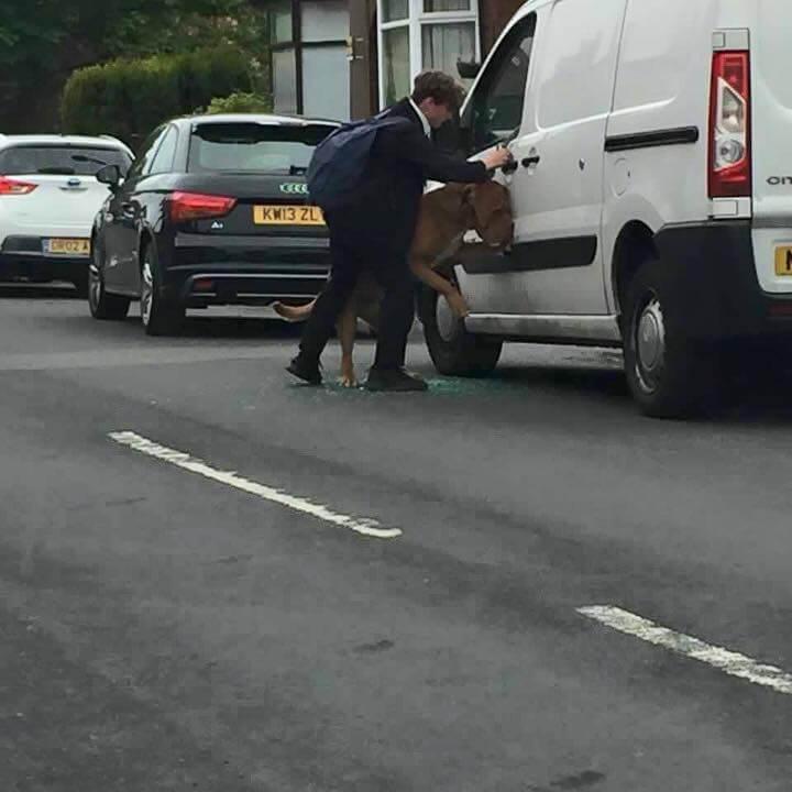 boy-smash-car-window-save-dog-2