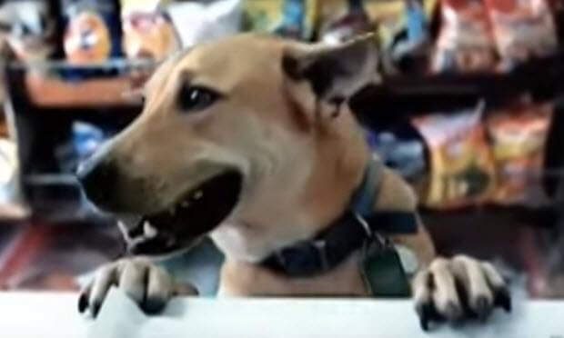 dog commercials