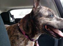 dog-sheltered-11-years