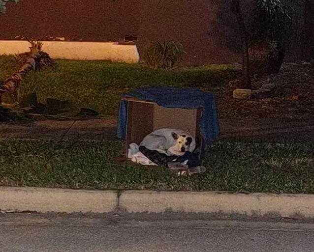 dog-waiting-his-family-2