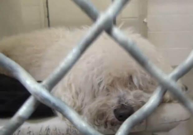 dog-was-surrendered-2