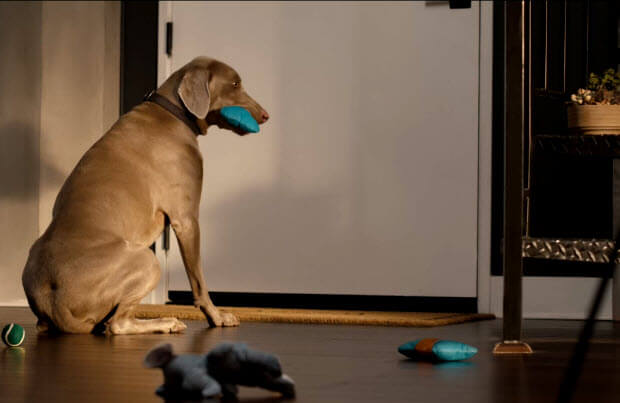 dog-you-coming-home-3