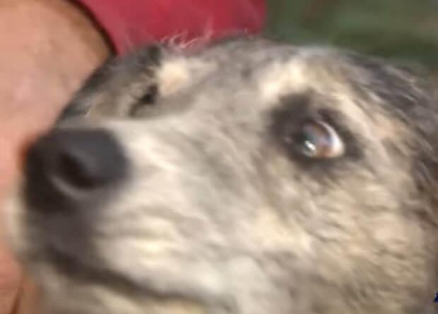 mountain-lion-attacked-dog-3