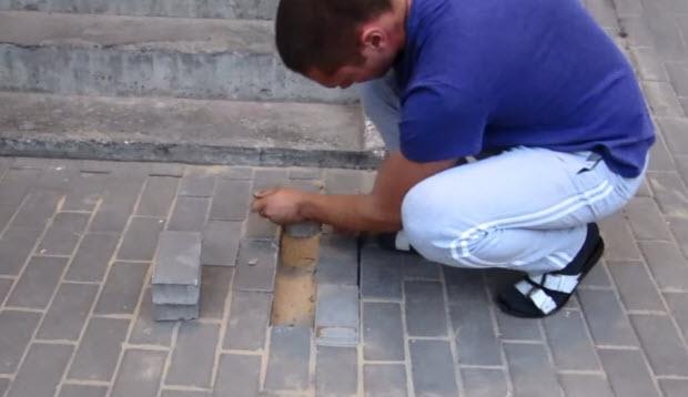 pregnant dog buried alive