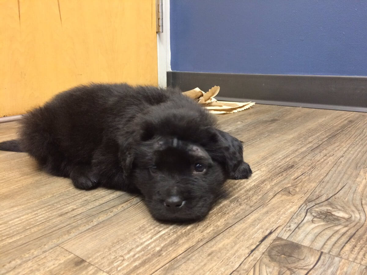 Puppy shot multiple times