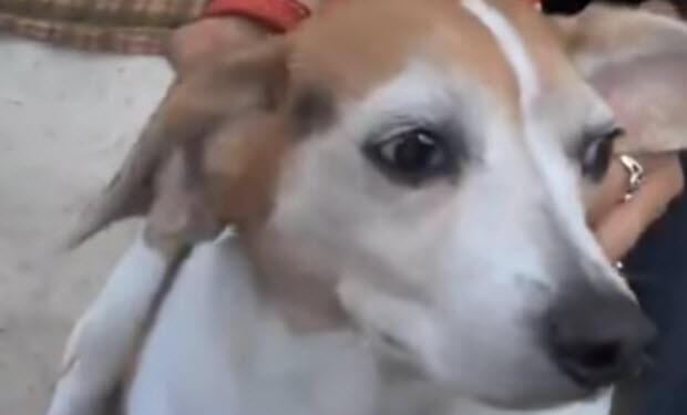 save dog's life