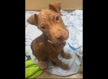 starved puppy adopted