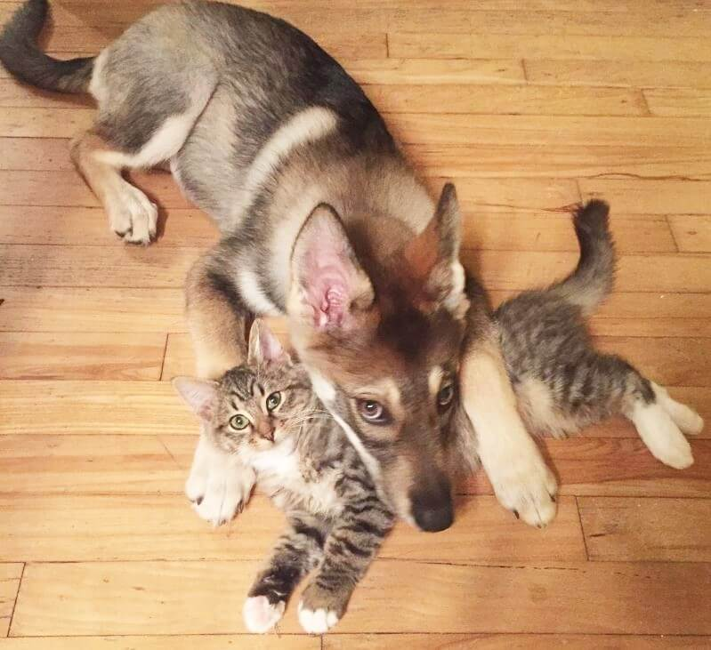 dog-cat-m