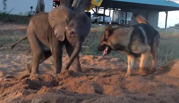 dog-elephant-friends