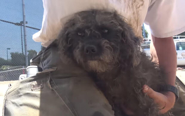 dog-scared-rescuers-2