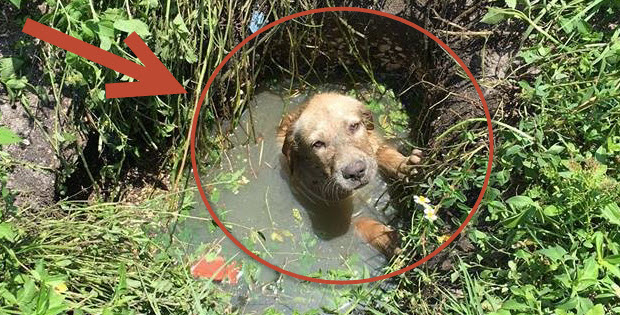 puppy stuck in septic tank