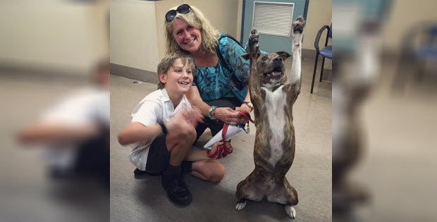 shelter dog excited to go home